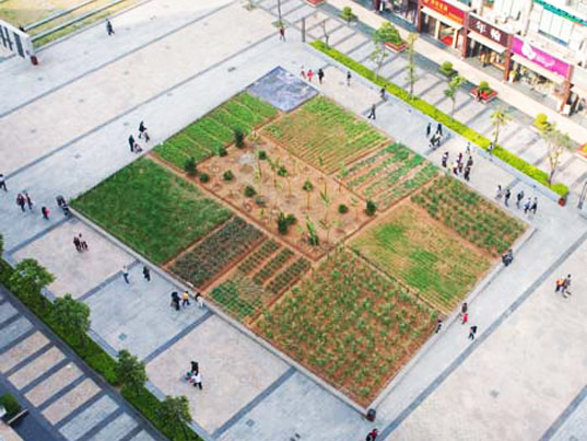 sustainable design, green design, shenzhen, urban farm, hong kong, bi-city biennale of urbanism/architecture, landgrab city