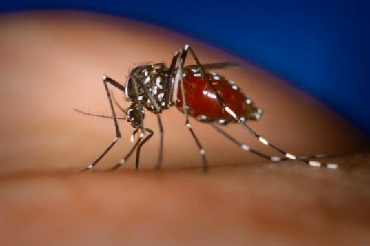 dengue fever, mosquitoes, malaria, africa, green design