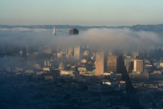san francisco, sf, fog, redwoods, sequioa, sempervirens, climate change, global warming