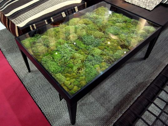 Moss Table Adds A Micro Landscape To Your Living Room Inhabitat Green Design Innovation