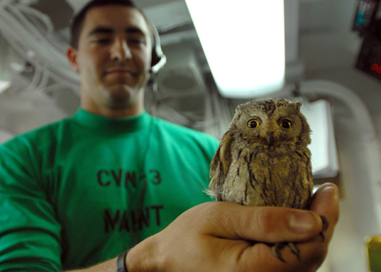Habby Attack, HABBY FIGHTS BACK, Screech Owl found in the cockpit of fighter jet, Adorable owl pic, cute owl, owliness