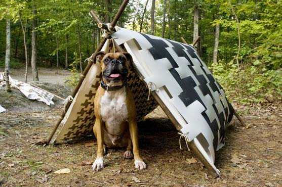 biodegradable dog tent, sustainable design, green design, green design for pets, dog camping tent, eco dog tent, biodegradable plastic tent