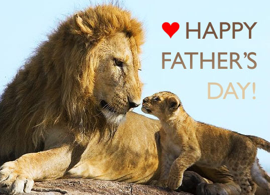fathers day lion and cub, inhabitat father's day