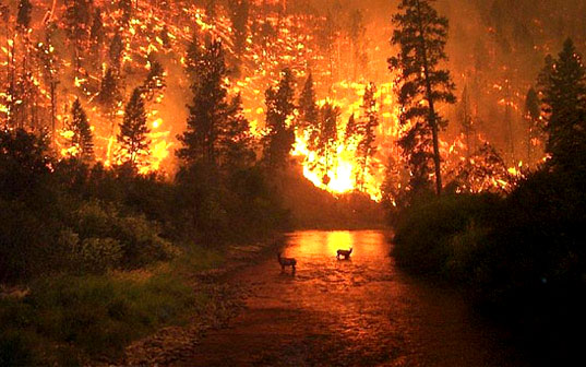 Global Warming Is Real and We Must Act Now!, Forest Fire, Bunnies, Climate Change, Natural Disaster