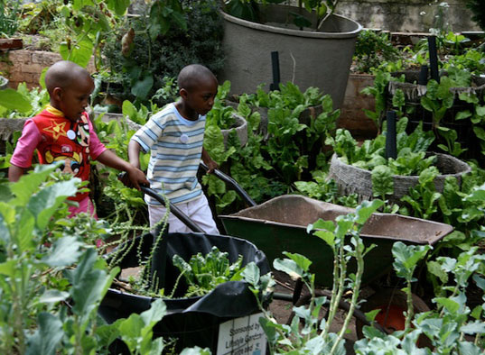 The Greenhouse Project Sustainable Living In Johannesburg