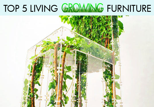 growing furniture, top five living growing furniture, michel bussien, living chair, mushrooms ate my furniture
