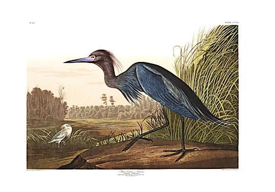 national audubon society, birds of america prints, inhabitat green gift guide, green holiday gifts, gifts that give back, socially conscious design, sustainable design