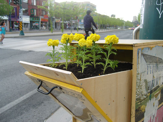 posterchild, blade diary, guerrilla gardening, urban gardening, marigolds, urban greening, urban greenery, street art, urban art, street art toronto, street beautification art, urban beautification, abandoned urban furniture beautification, flyer box, planter box, urban space, public space