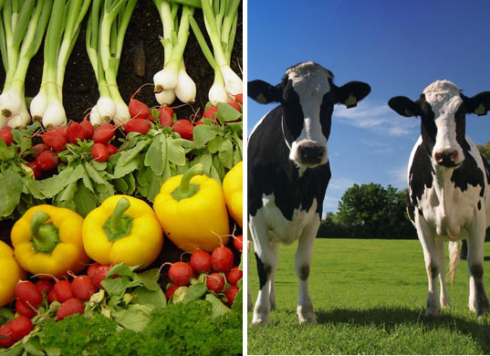 inhabitat blog picks, organic farming, organic agriculture, vegetarian, climate change farming, meat carbon footprint