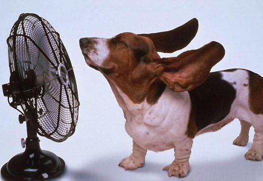 stay cool, keep cool, climate change, passive cooling, passive ventilation, energy efficiency