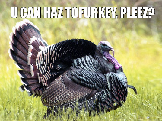Lol Cats Tofurkey Turkey, Thankful Turkey, thanksgiving, Inhabitat vegan thanksgiving, LOL Turkey, LOL Turkeh