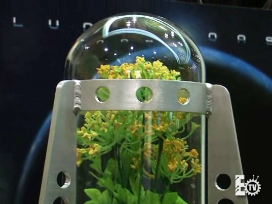 moon plant, lunar oasis, sustainable design, green design, paragon space development, google lunar x prize, odyssey moon, space gardening