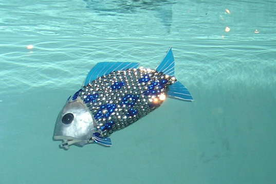 roboticfish-5, robotic fish, pollution fish, pollution monitoring, biomimicry, pollution-detecting robots, Robotics Department University of Essex