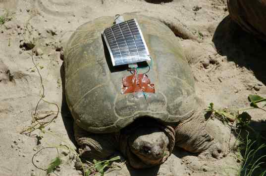 turtle, wifi, wi-fi, solar power, gps, nature conservation, extinction,