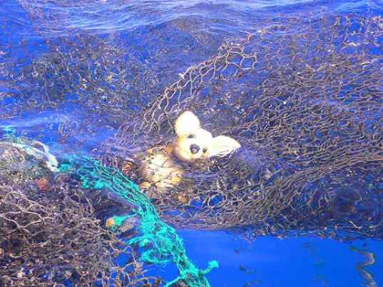Great pacific garbage patch is worse than we thought