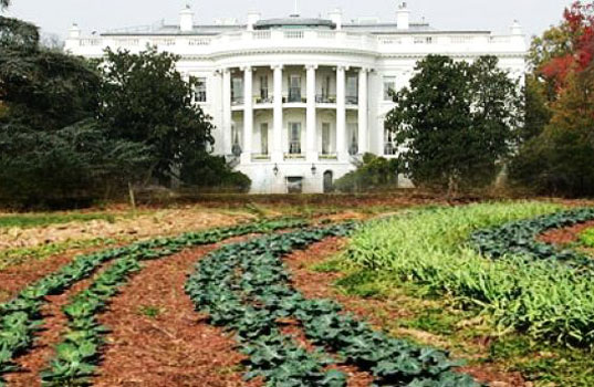 white-house-organic-farm, organic food, organic farming, white house organic farm project, who farm project, presidential farm, president organic farming, petition president farm, daniel bowman simon, casey gustowarow