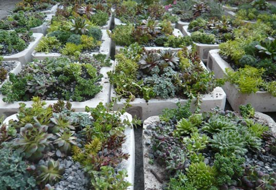 alive structures, marni horowitz, new york city green roofs, new york city green building, roof landscaping, open green space, native flora landscaping, living walls, nyc wildflower week 2009