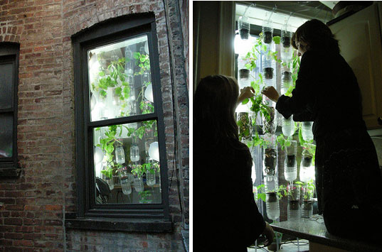 window farms, britta riley, rebecca bray, city food sources, urban food source, diy gardening, urban agriculture, urban ecology, urban farming, environmental diy project, eco diy project, environmental diy project, urban gardening